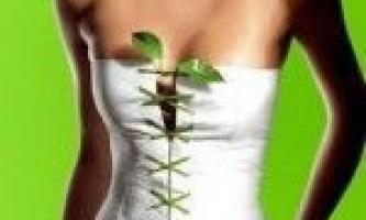 Трави для схуднення