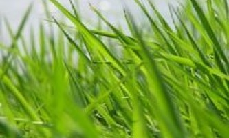 Вчені досліджували добову активність росту рослин