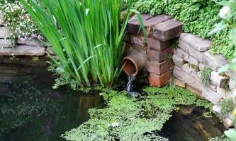 Догляд за водоймою навесні