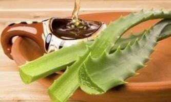 Варення з алое: рецепти з медом і цукром і його користь при різних хворобах