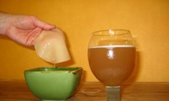 Шкода і користь чайного гриба