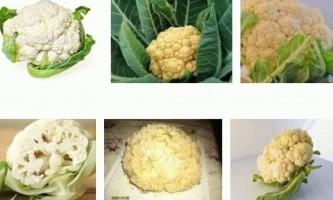 Вирощування і догляд цвітної капусти