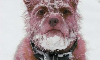 Кашель та інші осінньо-зимові хвороби собак