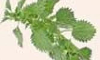 Зелені маски з кропиви
